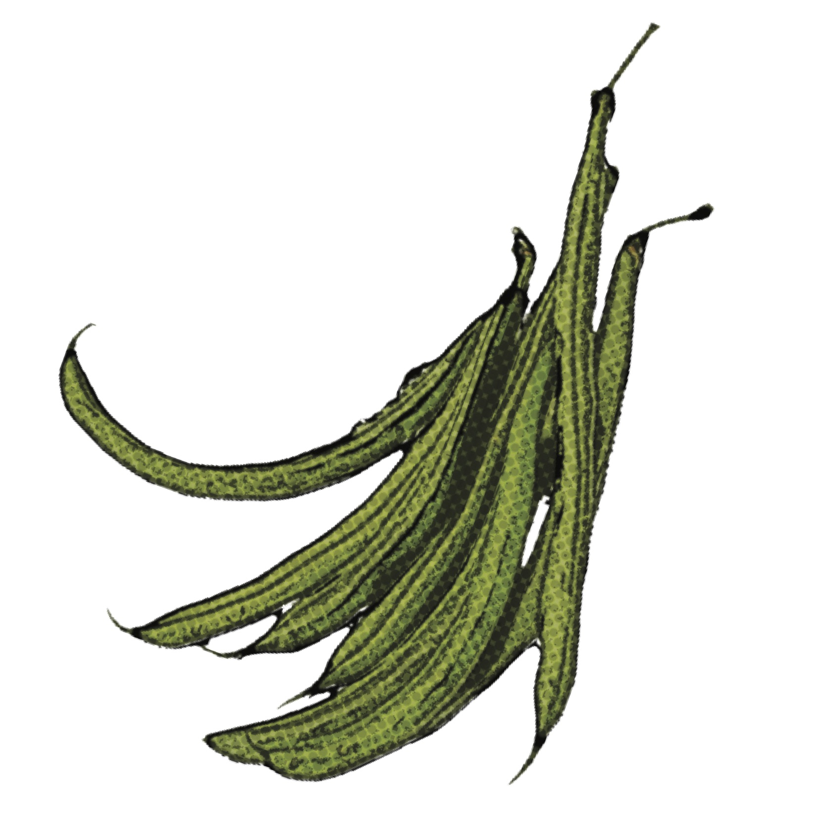 Find Green Bean Recipes