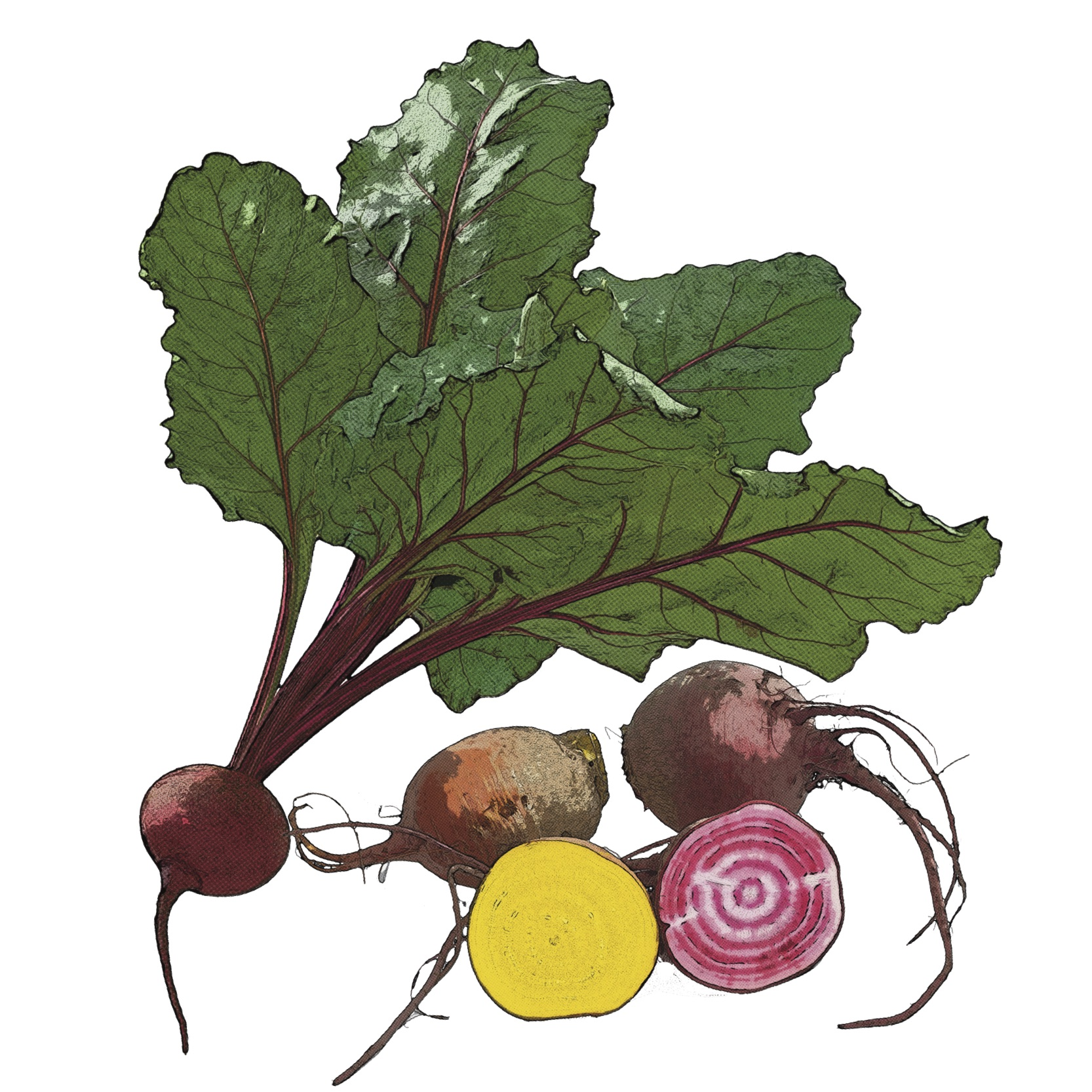 Find Beet Recipes