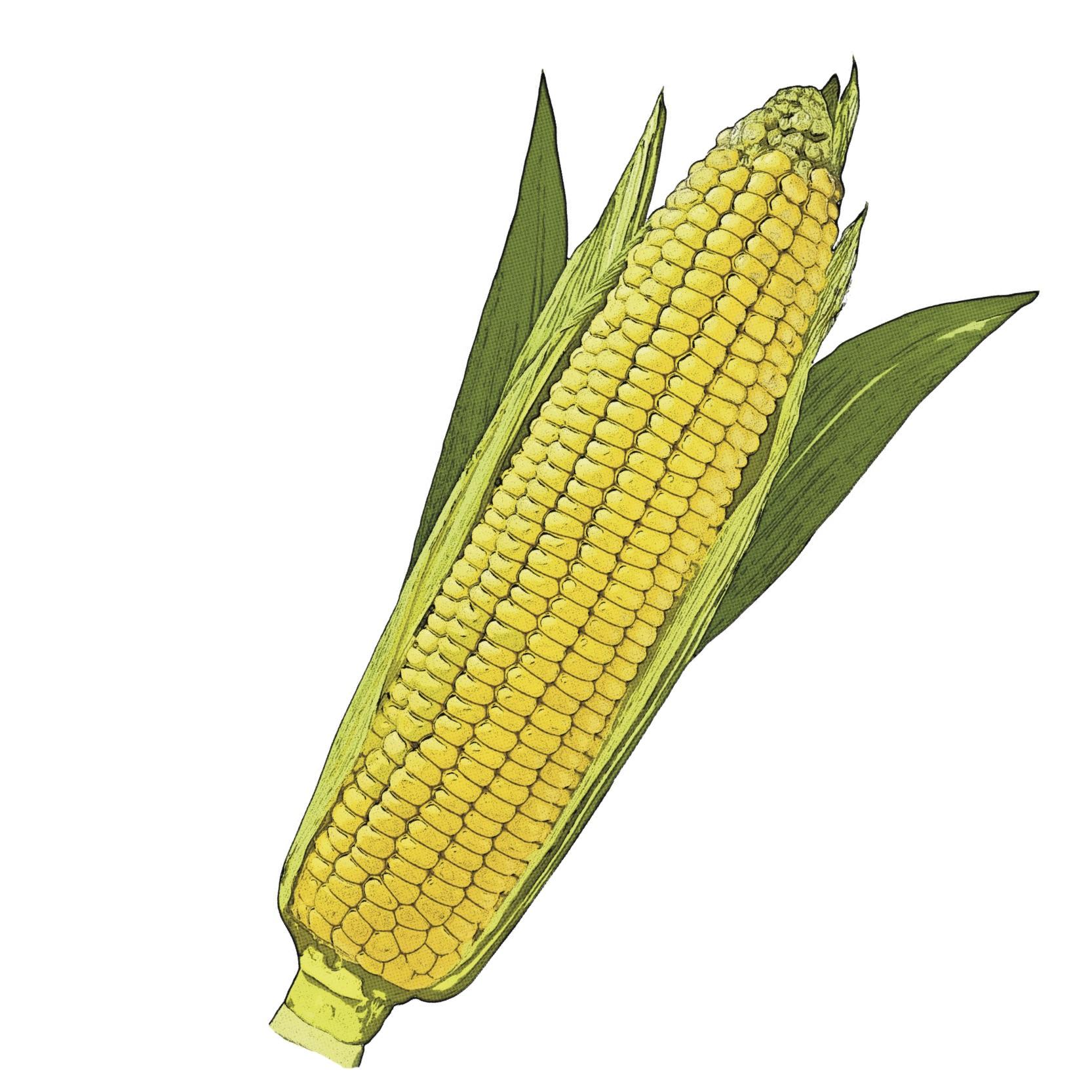 Find Corn Recipes