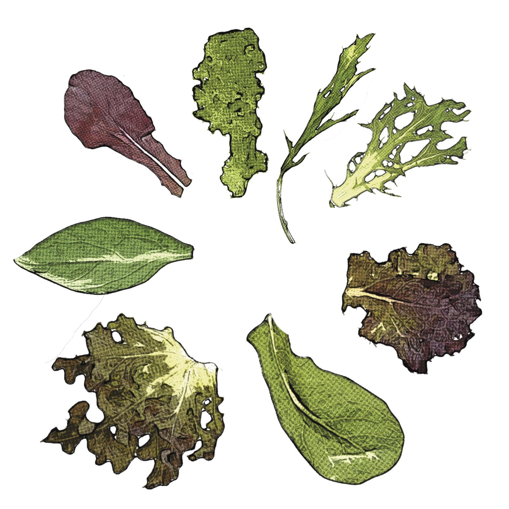 Find Greens Recipes