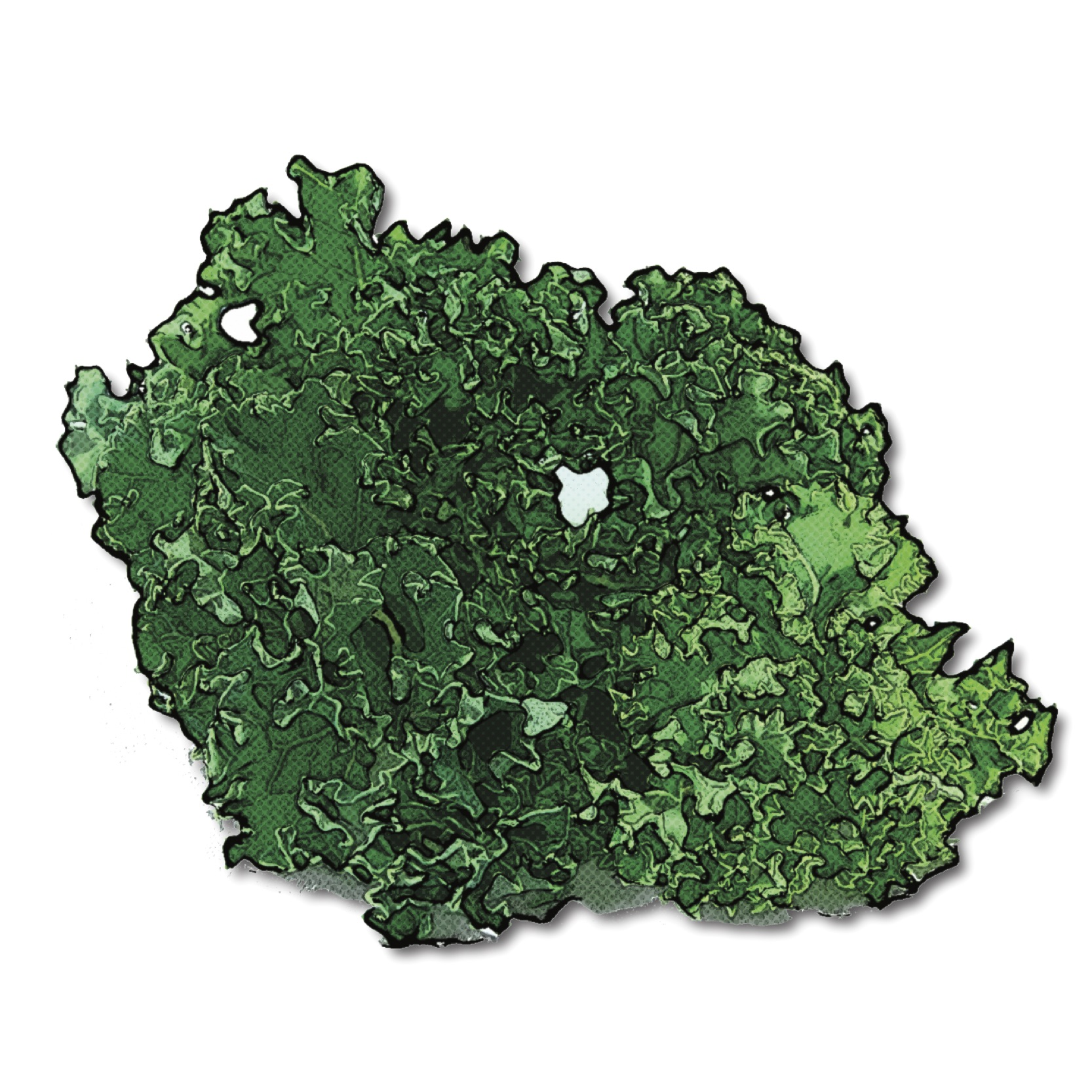 Find Kale Recipes