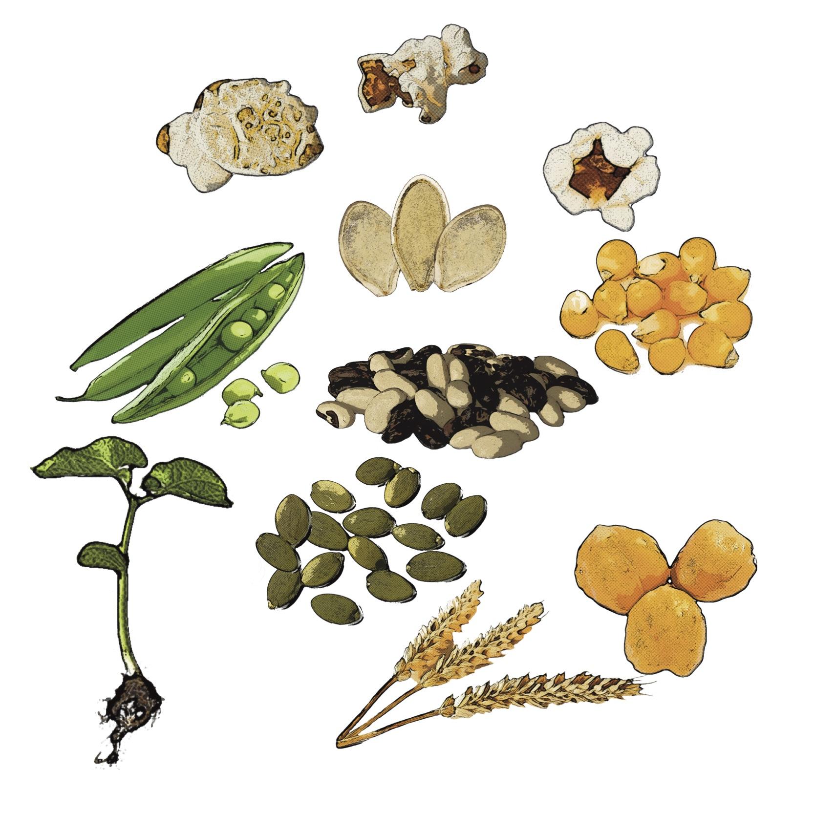 Find Seeds Recipes