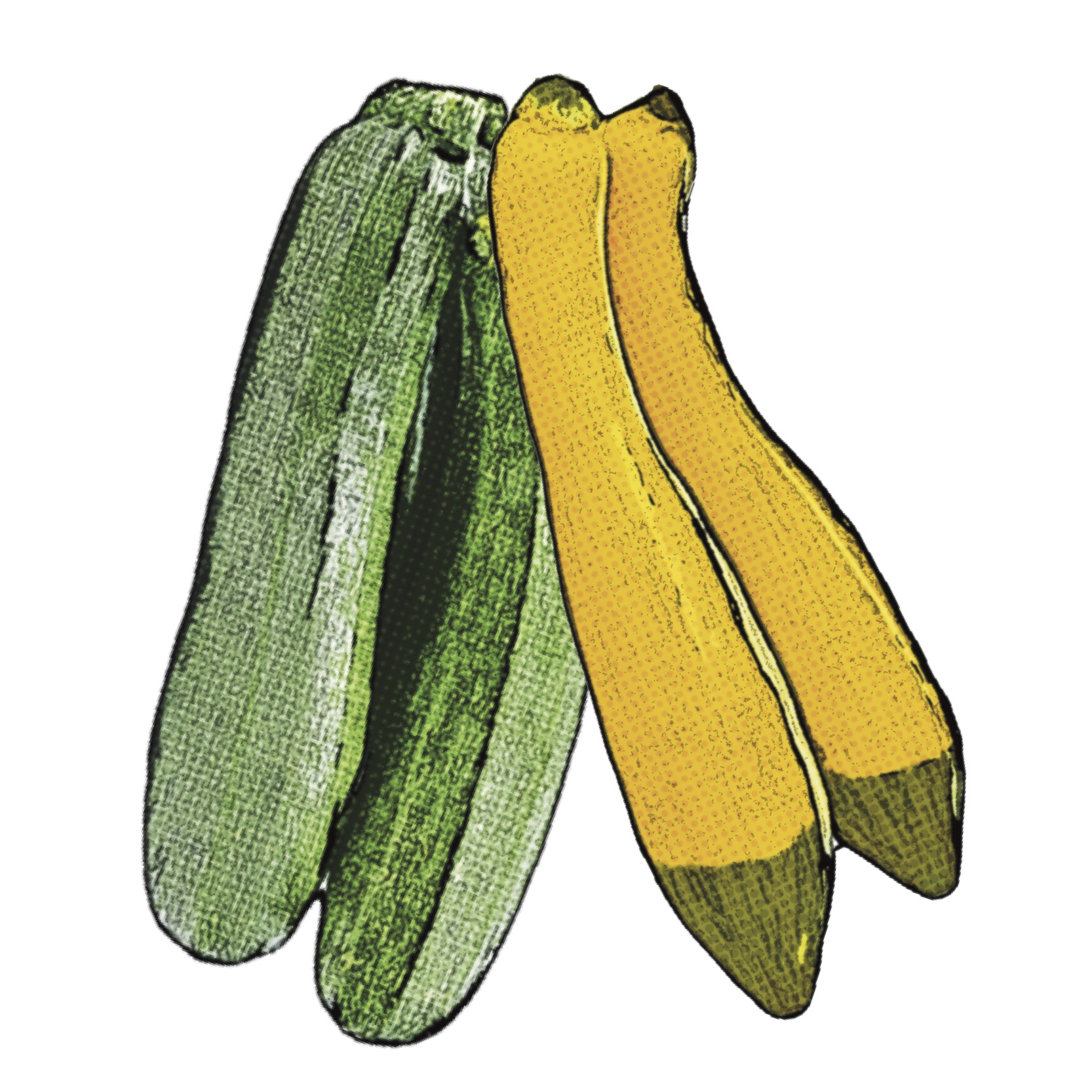 Find Summer Squash Recipes