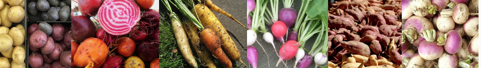 lots of different root vegetables